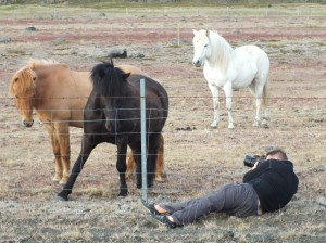 Me taking a photo of 3 icelandic horses through a wire fence